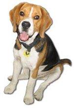 Beagle Search